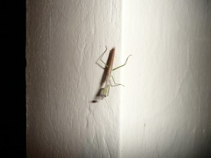 Miscellaneous weird insect